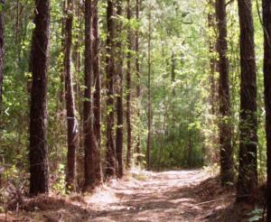 Buckwalter Greenway Trail 2